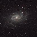 M33,                                agostinognasso