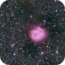 IC 5146 The Cocoon Nebula,                                Peter Webster