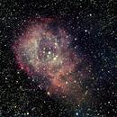 Rosette Nebula,                                Brent