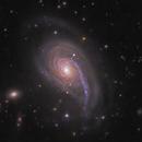 Fiddlehead Galaxy NGC 772,                                Morris Yoder