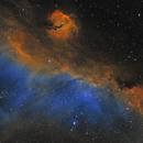 IC 2177 - Seagull Nebula in SHO,                                Steve Milne