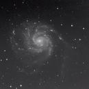 M 101  Pinwheel-Galaxie,                                Marcus