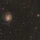 M101,                                Friesenjung