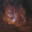IC 410 Tadpoles,                                RichardBoudreau