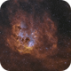 IC 410 Tadpoles,                                RichardBoudreau