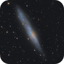 NGC 55 - String of Pearls Galaxy,                                NocturnalAstro