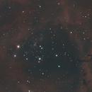 NGC2239 Rosette Nebula,                                David Wright