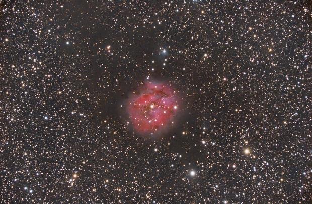 IC 5146,                                Tertsi