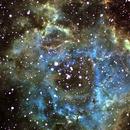 NGC 2244 Rosette Nebula,                                Richard O