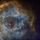 NGC 2237 - Rosetta,                                Detlef Scholz