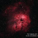 The Tadpoles of IC 410  HOO,                                Paul Borchardt