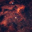 Pelican Nebulae IC-5067,                                Thierry Beauvilain