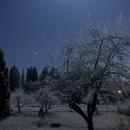 Moonlit Backyard,                                Lars Frogner