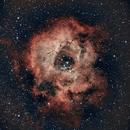 NGC2244 Rosette Nebula,                                Chris Nowland