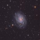 NGC 300 - A southern spiral galaxy,                                Matthew Sole