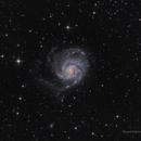 M101 The Pinwheel Galaxy,                                Luca Balestrieri Cosimelli