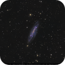 NGC 4236 Barred Spiral Galaxy in Draco,                                Michael Feigenbaum