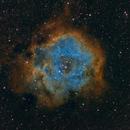 Rosette Nebula -Hubble Palette,                                Bob J