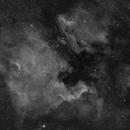 NGC 7000 Wide,                                Erik Guneriussen