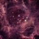 Rosette Nebula ( Caldwell 49),                                Wagner Amaral
