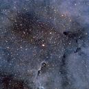IC 1396 - Elephant Trunk Nebula,                                David McClain