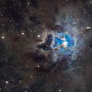 NGC 7023 Iris Nebula,                                jdowning