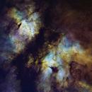 IC 1318 Butterfly Nebula,                                William Burns