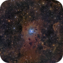 NGC 7023 Iris,                                Vadim Kozatchenko