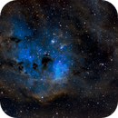 IC410 and the Tadpoles,                                Tim McCollum
