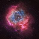 Cosmic Rosette,                                Muhammad Ali
