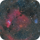 NGC2264 and IC2169,                                Yuichi Kawamoto