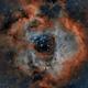 NGC2237 - Rosette Nebula,                                Tom