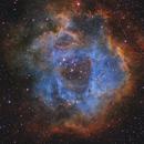 Rosette Nebula, SHO,                                Aaron Odell