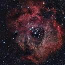 NGC 2237 - Rosette Nebula,                                Rob Petri