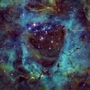 Rosette Nebula NGC 2244,                                Caleb Melton