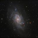 M33 HaLRGB,                                Rodd Dryfoos