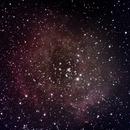 Rosette Nebula,                                Andy Harwood