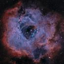 Rosette Nebula (NGC-2237),                                Joel Shepherd