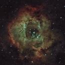 NGC 2244 - The Rosette Nebula,                                Tom Harbin
