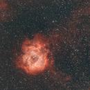 Rosette Nebula NGC2244,                                Michael Mantini