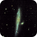 Whale Galaxy,                                Tom Robbe
