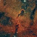 Elephant's Trunk Nebula IC 1396,                                Everett Lineberry