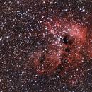 IC410: Tadpoles,                                Kyle Goodwin