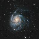 M101 Pinwheel Galaxy,                                Bill Tinsley