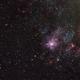 NGC 2070 in the LMC,                                Roger Groom