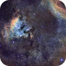 NGC 7822 in SHO,                                Douglas J Struble