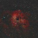 IC410 Tadpoles,                                PeterCPC