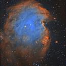NGC2175 - Monkey Head Nebula,                                Emilio Zandarin