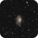 NGC1961 (ARP184) - Disturbed Spiral,                                Jason Guenzel