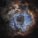 Rosette Nebula SHO,                                Craig